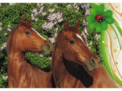Pohlednice koně 28