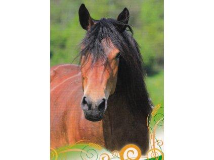 Pohlednice kůň 30