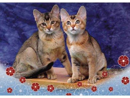 Pohlednice Kočky 42