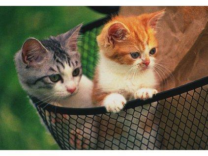 Pohlednice kočky 1