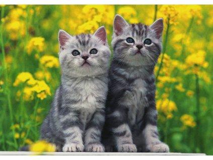 Pohlednice kočky 3