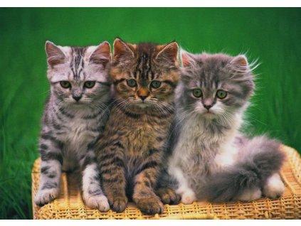 Pohlednice kočky 5