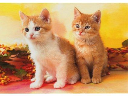 Pohlednice kočky 6