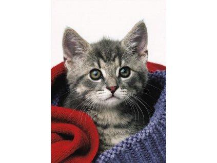 Pohlednice Kočka 10