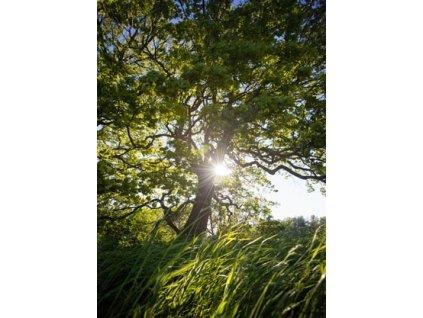Pohlednice Okamžik v trávě
