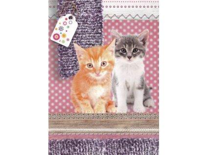Pohlednice Koťata