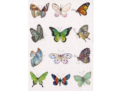 Pohlednice Motýlci