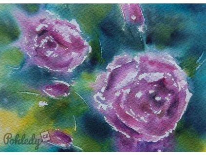 Pohlednice Růže
