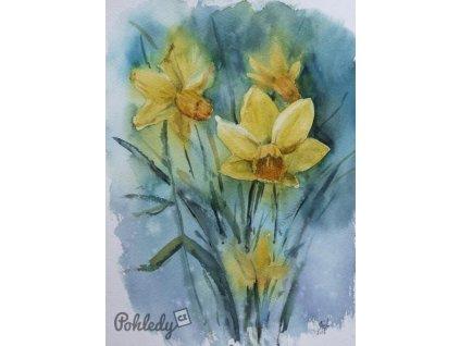 Pohlednice Žlutý narcis