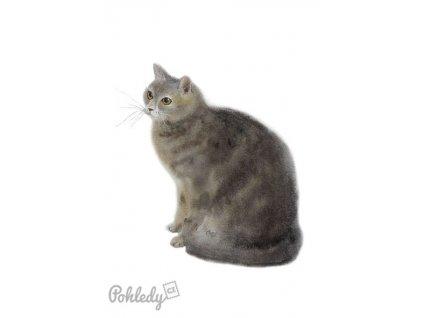 Pohlednice Kočička