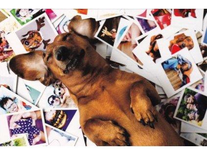 Pohlednice pes postcrosser