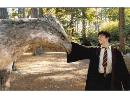 Pohlednice Harry Potter 28