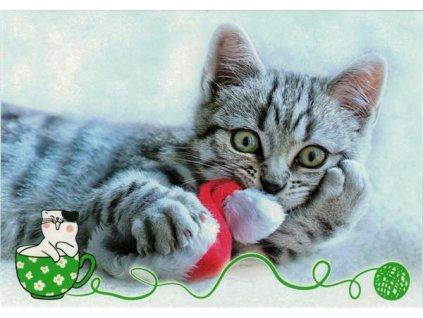 Pohlednice Kočka 65