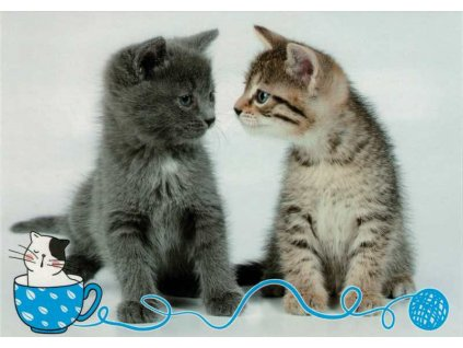 Pohlednice koťata 67