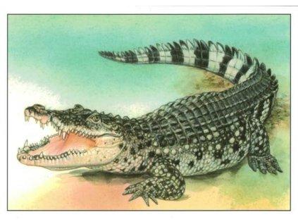 Pohlednice Krokodýl filipínský