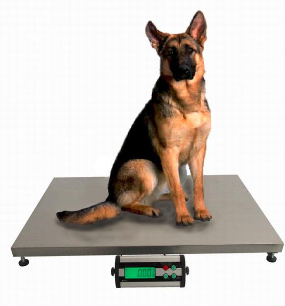 Váhy veterinární