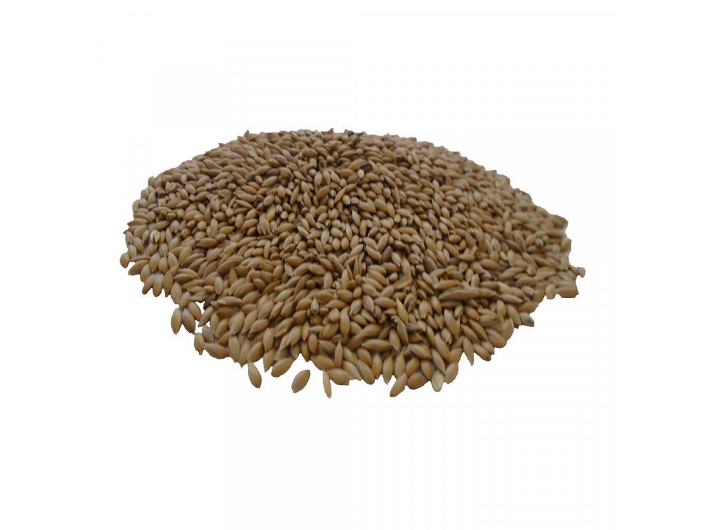 Plain Canary Seed 2048x2048