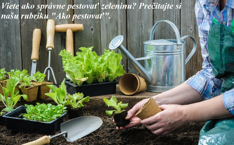 Ako pestovať