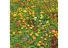 Kvetinový koberec