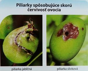 piliarka