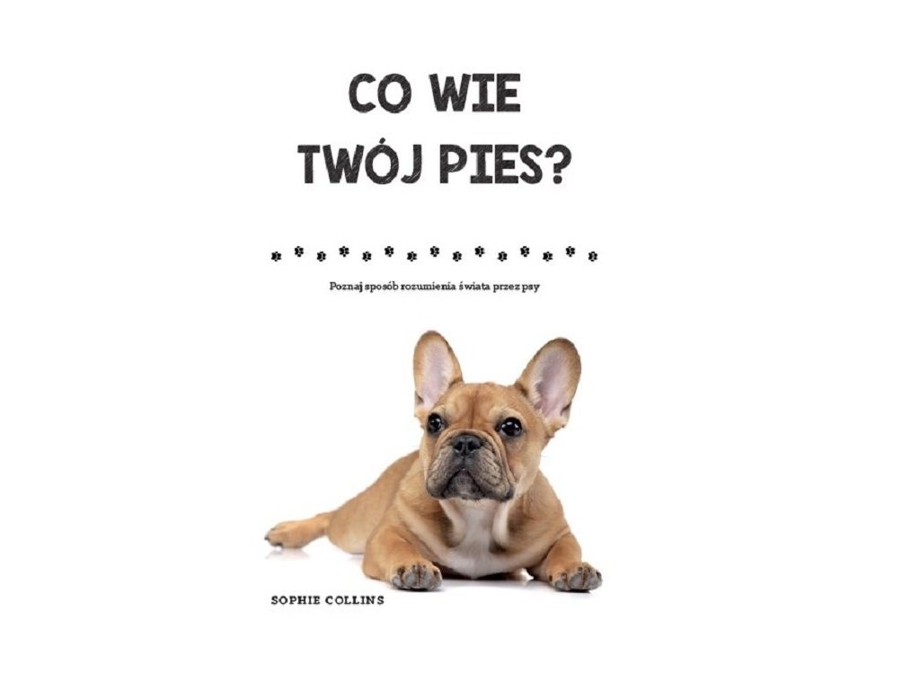 Co wie Twój pies?