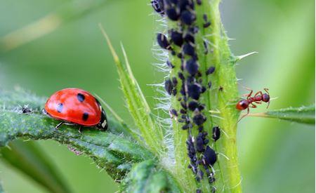 Odpuzení hmyzu, savých a žravých škůdců
