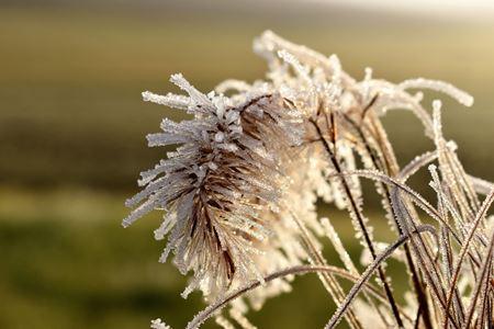 Vliv prostředí a počasí, poškozující péče, nadměrný růst