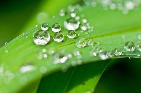 Tonika na podporu růstu, kvetení a posílení rostlin
