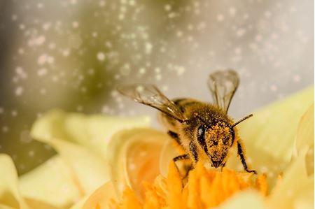 Ochrana včel