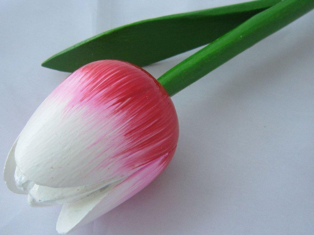 0004890 dreveny tulipan cerveno ruzovo bily