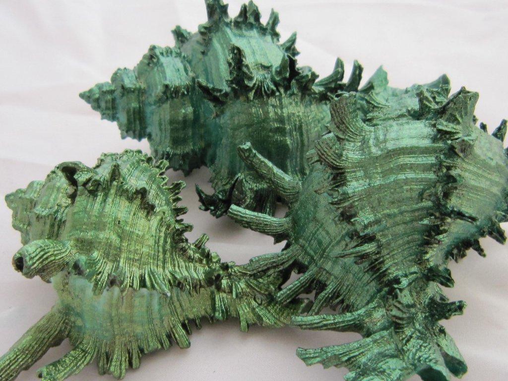 0009943 musle murex green 3 ks