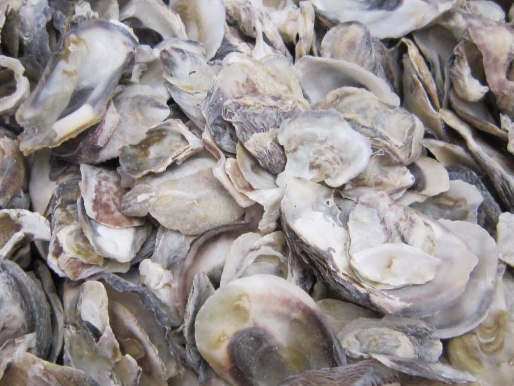 0006845 musle oyster ustrice 100 g