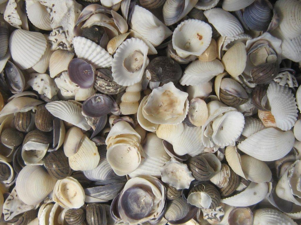 Mušle Shell mix 1020 g