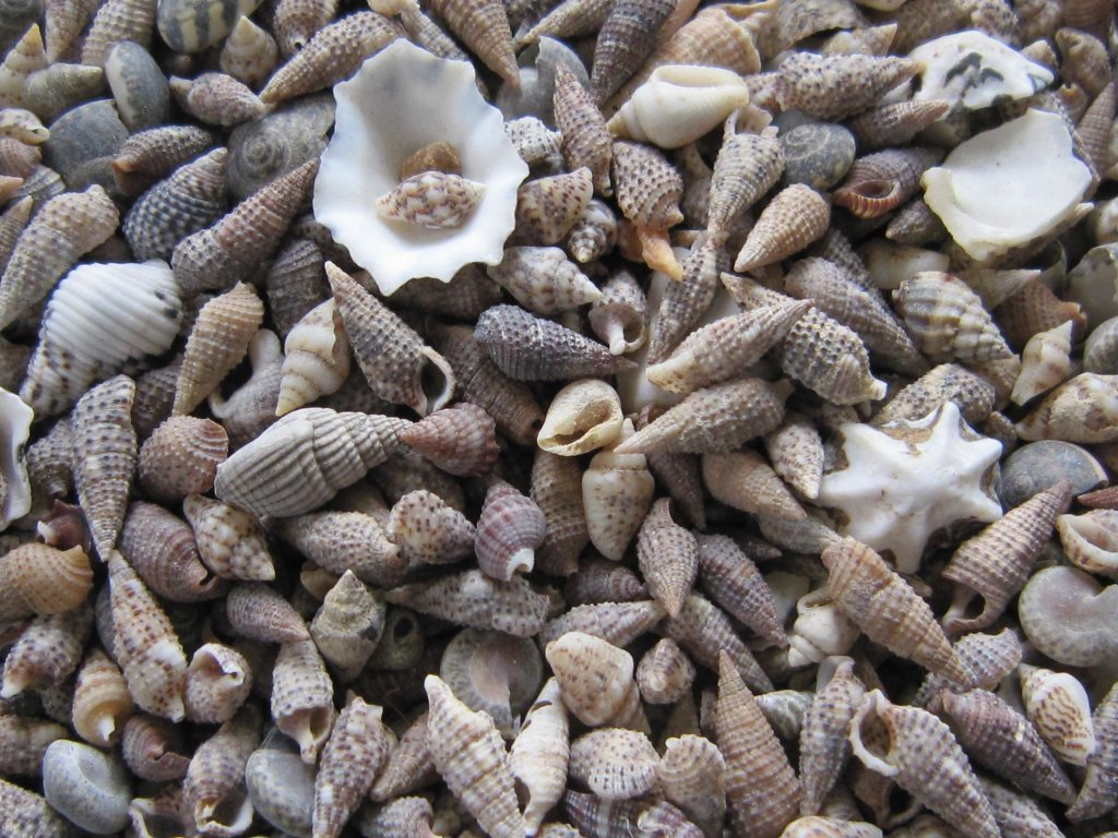 0011221 musle shell mix mini 100 g