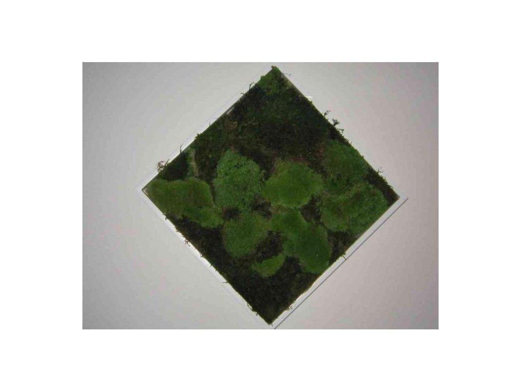 0000298 obraz z mechu 35x35 cm
