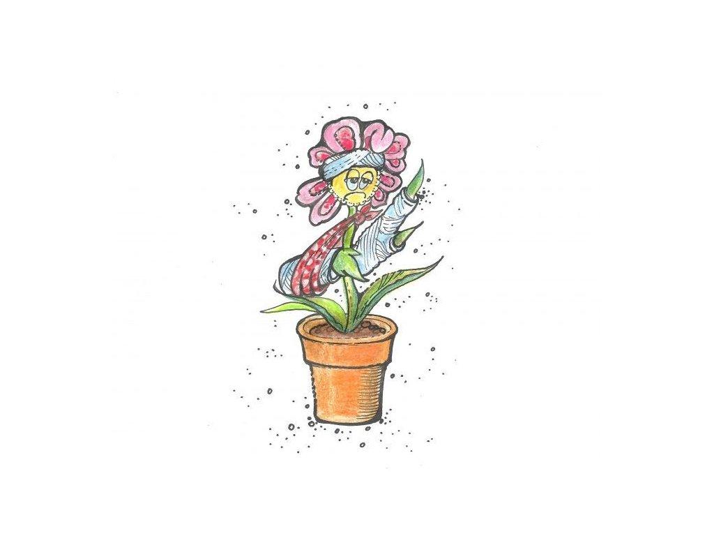 0000501 poraneni rostlin