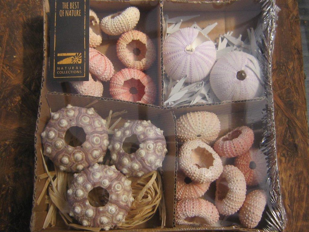 Alfonso urchin kazeta mix
