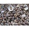 0011221 musle shell mix mini 100 g