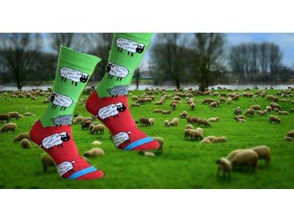 Ponožky Ovečky 304