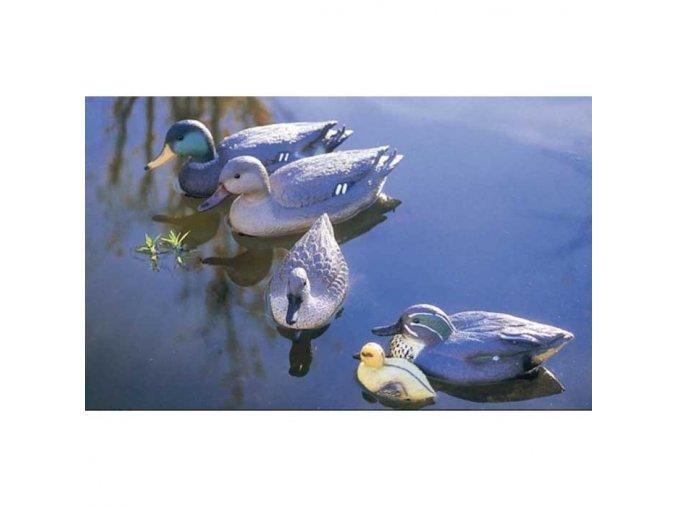 1828 2264 mallard duck female