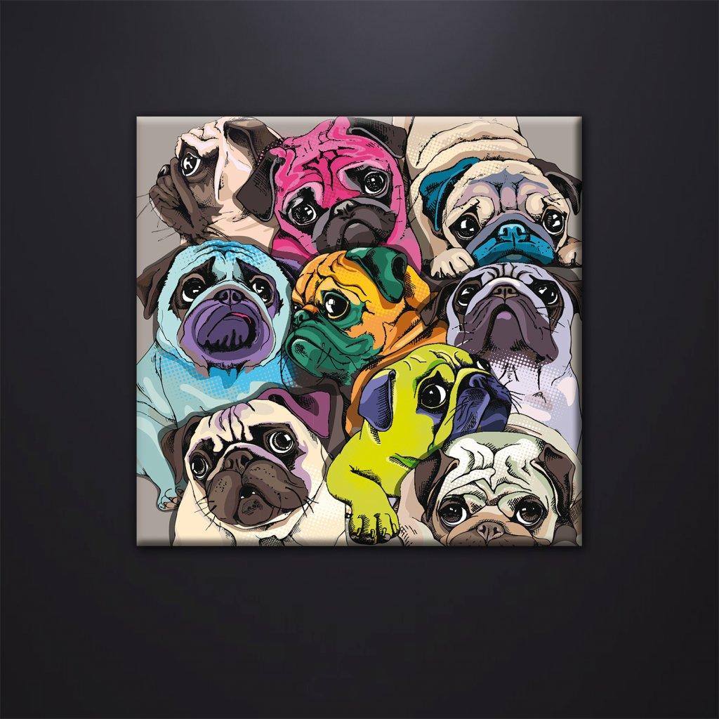 Obraz na stěnu Pugs