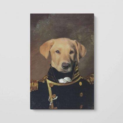 portrety domacivh mazlicku admiral