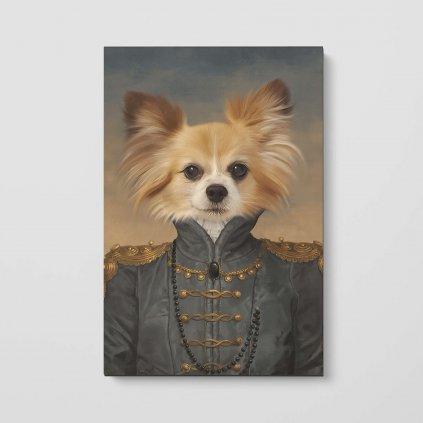portrety domacich mazlicku Baronka