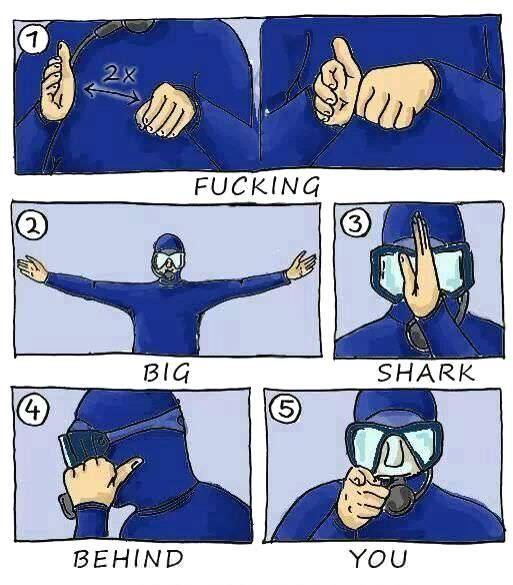 sharkbehindyou