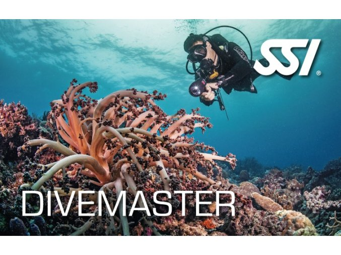 400183 Dive Master v2