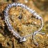 4ocean bracelet manatee bracelet 6290345885754 grande