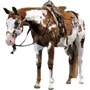 Potřeby pro koně