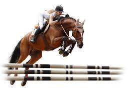 Závodní vybavení koně