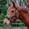 Lonžovací ohlávka EKO (Velikost pony)