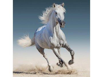 Povlak na polštářek White horse micro 40x40 cm